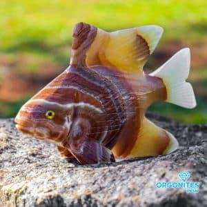 Peixe Ônix Amarelo e Sardônia 460g