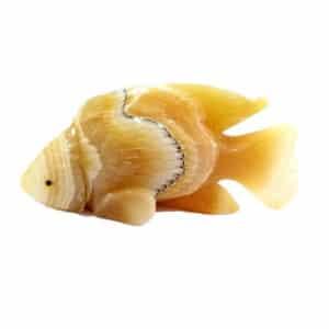 Peixe Ônix Amarelo e Sardônia 590g